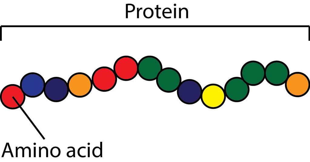 Protein Vs Amino acids